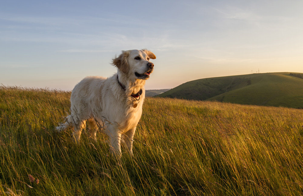 Dog Friendly Yorkshire: The Guide
